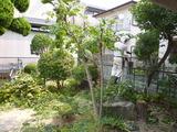 牧野宅庭植木 (2)