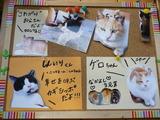 猫ハウス猫ちゃん紹介1