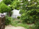 牧野宅庭植木