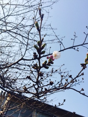 写真 2015-03-22 14 54 31