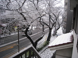 雪(中野通り:080203)