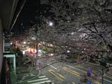 中野通り桜(080329夜桜-3)