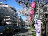 桜並木2007[0330-1]