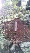 穂見諏訪十五所神社(20141012)秋大祭女欅