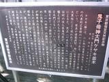 155_5537.JPG-keyaki2