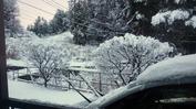 積雪状況(20131219)AP庭先