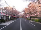 桜-2010(中野通り[南]03.31)