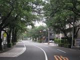 桜2011(中野通り:北)6.1