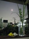 中秋の名月(2008)