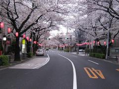 桜-2010(中野通り[北]04.02)