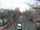 桜並木2007[提灯準備-2]