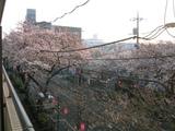 桜並木2007[03.29-1]