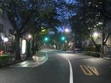 桜-2010(中野通り[北]10.01)