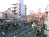 桜並木2007[03.28-2]