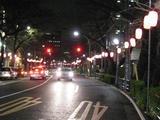桜-2010(中野通り[北]03.18)