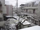降雪中(2012.2.29)2