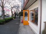 中野通り桜【満開】(080328工房前)