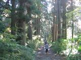 杉並木(071028)