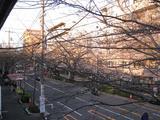 中野通り「桜」 2009.03.21-s