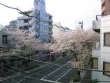 桜並木2007[04.04-2]