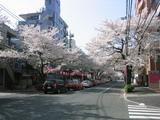 桜並木2007[04.01-3]
