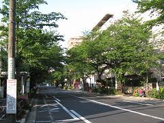 中野通り「桜」 2009.04.29-s