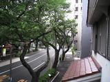 桜-2010(中野通り[剪定北]06.05)