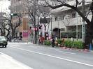 中野通り桜まつり2012(提灯設営3.19)