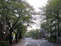 桜-2010(中野通り[北]04.24)