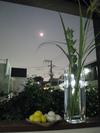 十五夜(2008.09.14)