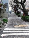 中野通り桜2012(散る花びら)4.11