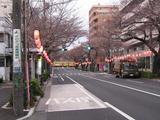 桜-2010(中野通り[南]03.27)