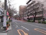中野通り「桜」 2009.03.22-s