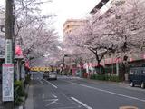 中野通り「桜」 2009.04.04-s