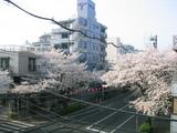 桜並木2007[04.01-2]