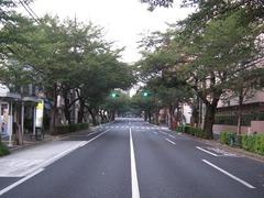 桜-2010(中野通り[南]08.23)