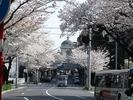 中野通り桜2012(水道塔)4.10