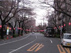 中野通り「桜」 2009.03.28-n