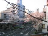桜並木2007[03.29-2]
