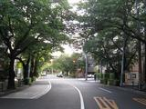 桜-2010(中野通り[北]06.01)