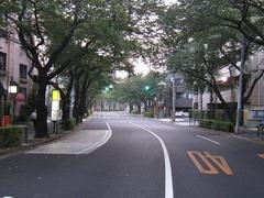 桜-2010(中野通り[北]08.23)