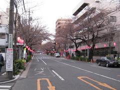 中野通り「桜」 2009.03.28-s