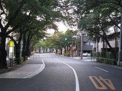 桜-2010(中野通り[北]07.23)