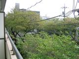 桜並木2007[04.15-1]