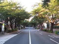 桜-2010(中野通り[南]07.23)