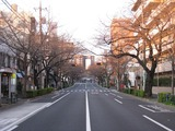 桜-2011(中野通り:南)3.29
