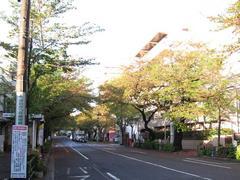 中野通り「桜」 2009.04.15-s