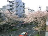 桜並木2007[04.07]