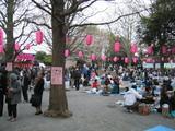 桜まつり2007[会場内全体]