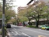 中野通り桜(080412南方面)